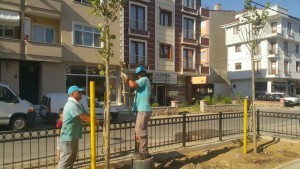 Ümraniye Belediyesi Ağaçlandırma Çalışmalarına Devam Ediyor