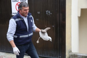 Yaralı Martıya Ümraniye Belediyesi Ekipleri Müdahale Etti