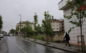 Ümraniye Yeni Dikilen Ağaçlarla Yeşile Büründü